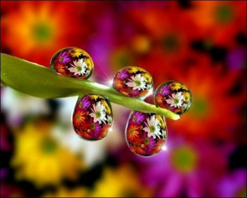 Some Magnificent Collection of Macro Photography (35)