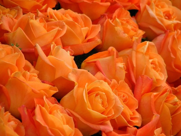 Light orange roses bouquet images for The meaning of orange roses