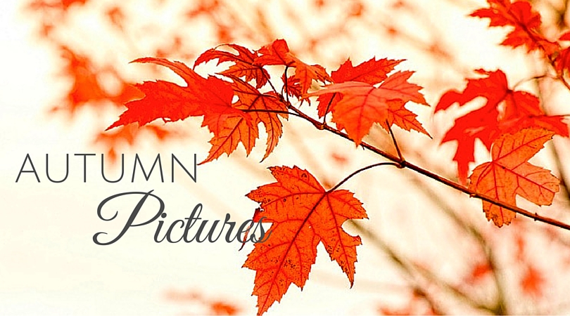 51 Amazing Autumn Pictures