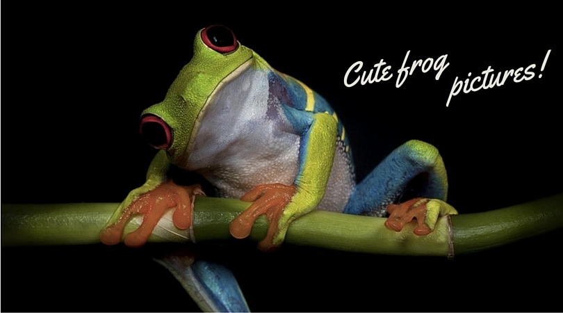 31 Cute Frog Pictures