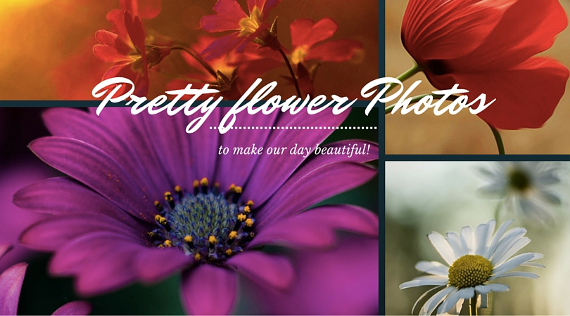 41 Pretty Flower Photos