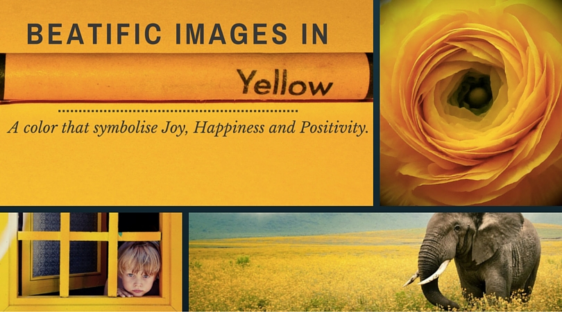 32 Beatific Images in Yellow