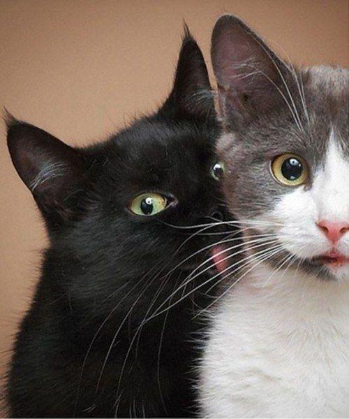 Cat Pictures10