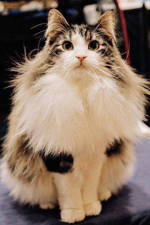 Cat Pictures5