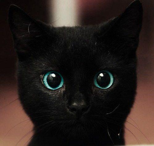 Cat Pictures7