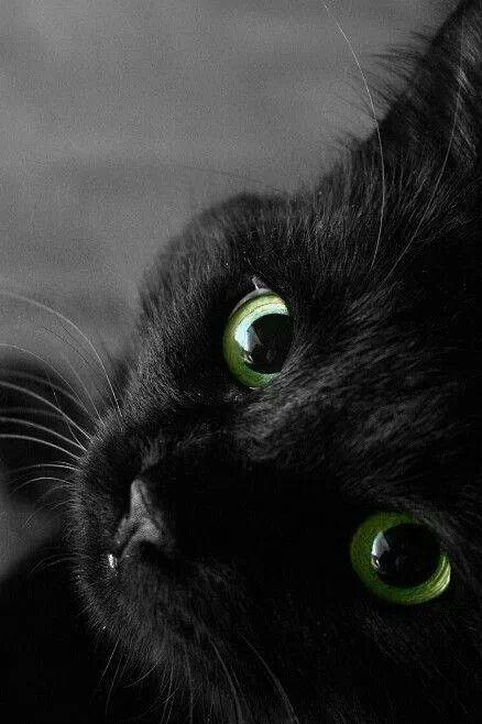 Cat Pictures8