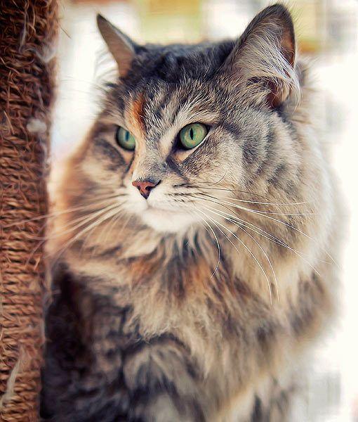 Cat Pictures9