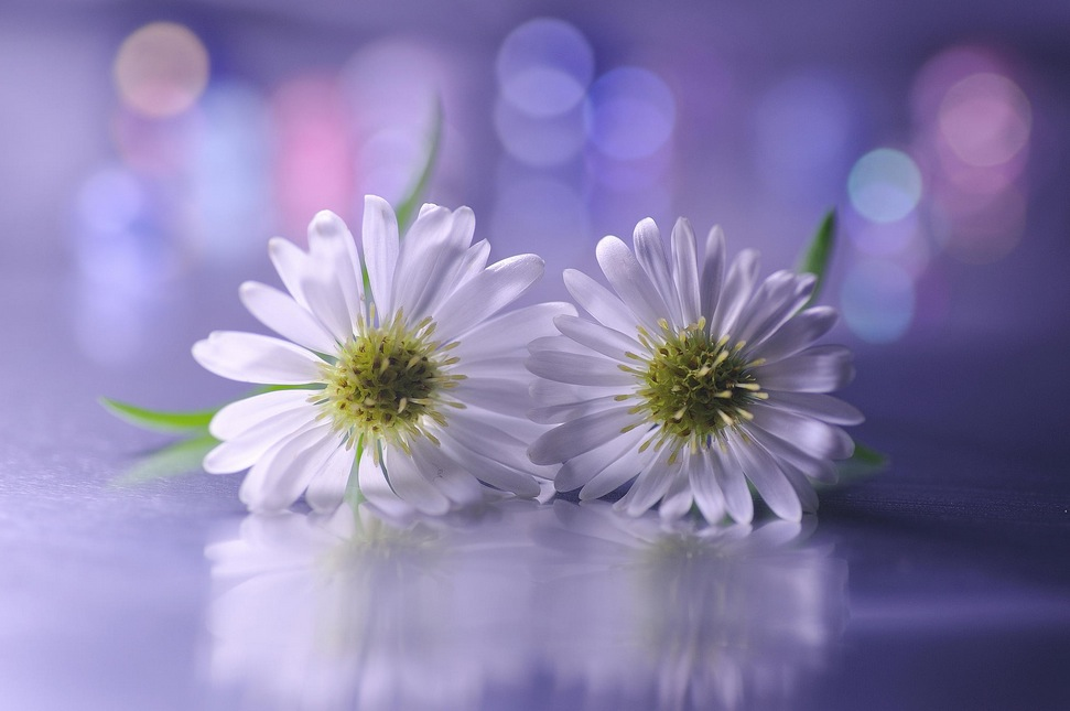 25 Beautiful Images of Flowers