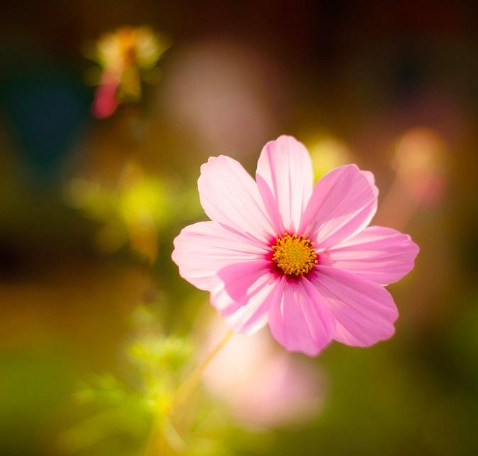 Light on flower