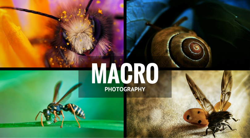 43 Wonderful Macro Photography