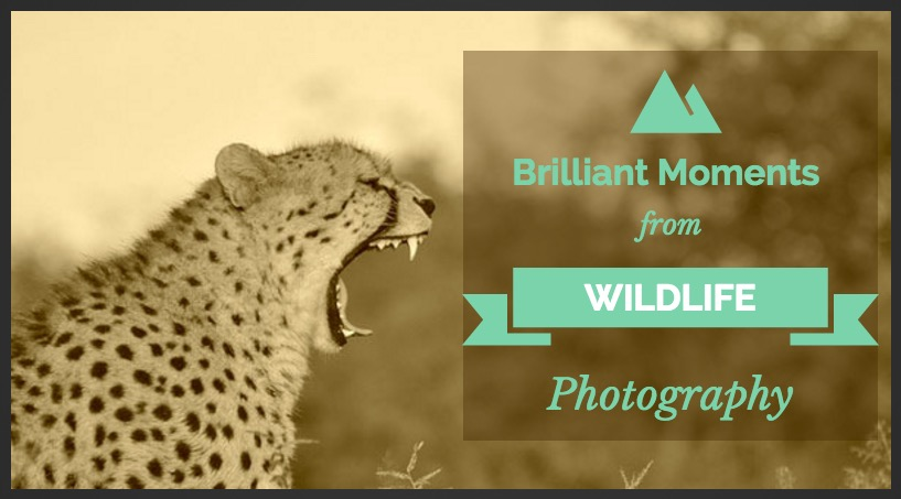 Brilliant Moments from Wildlife Photography