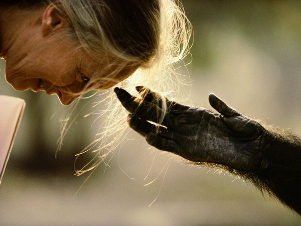 Jane Goodall With Chimp