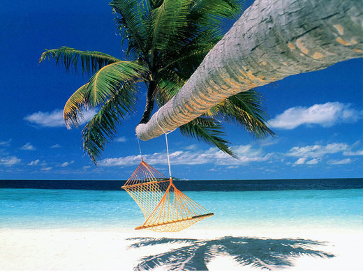 Relax – Hammock Hanging from Palm Tree