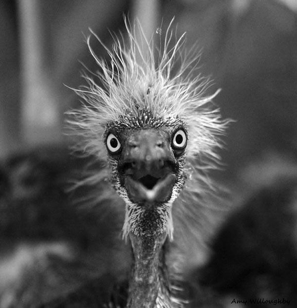 Startling! Albert Einstein; back as a bird