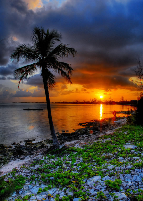 Cayman Palm Sunset