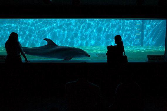 Dolphin Encounter by Alex Federowicz
