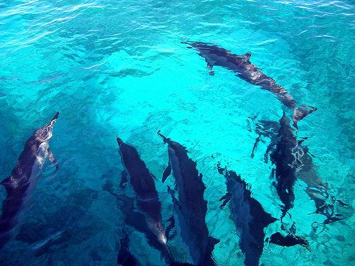 Sea Party by Steve Jurvetson
