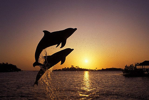 leaping dolphins by Zest-pk