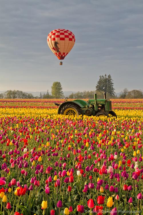tractor-tulips-balloon