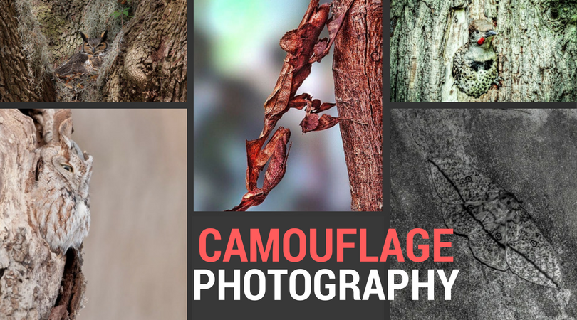 camouflage photography