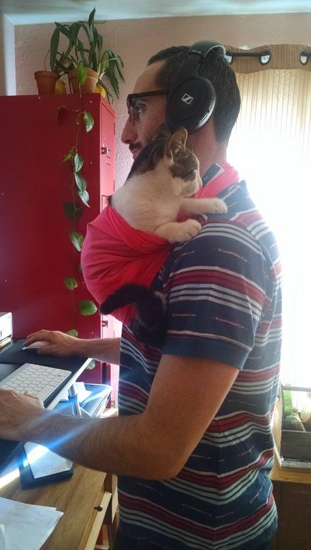 kitten sling
