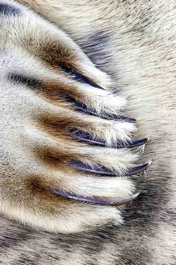 Grey seal claws, Lincolnshire by Jim Greenfield