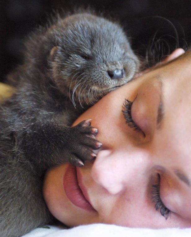 Just a baby otter