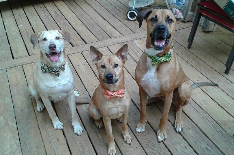 So I bought my dogs some bowties