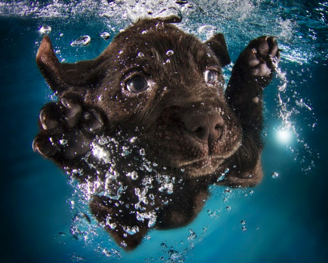 Swimming Puppies
