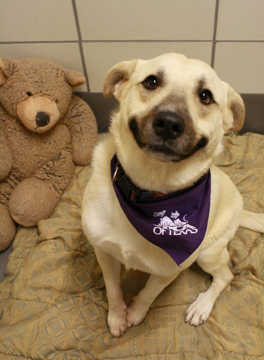 Teddy bears make shelter dogs smile