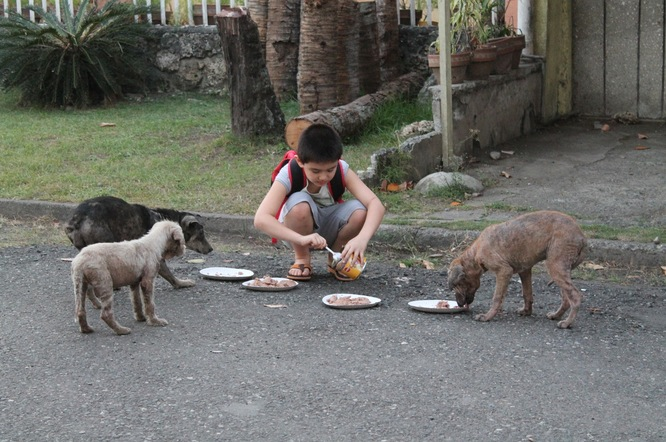 This 9-Year-Old Built A Nonprofit, No-Kill Animal Shelter Out Of His Garage To Help Stray Animals