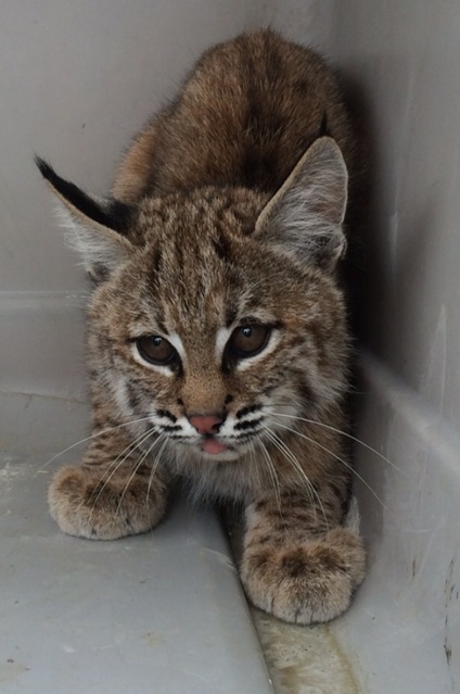 This little guy was found at the local Junior High yesterday
