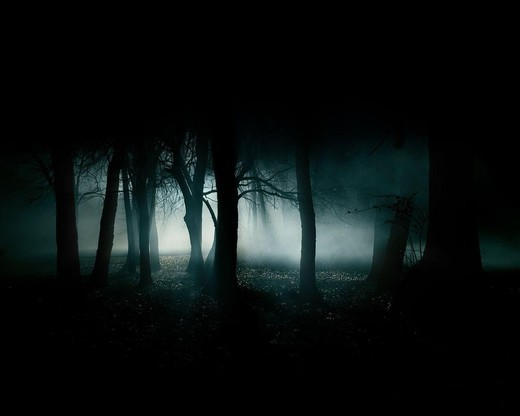 Forest trees scenery fog dark forest night