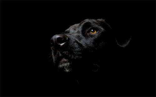 Noir-esque Dog
