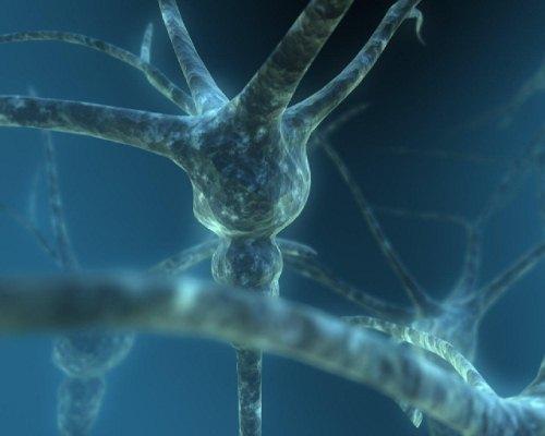 Dual Neurons