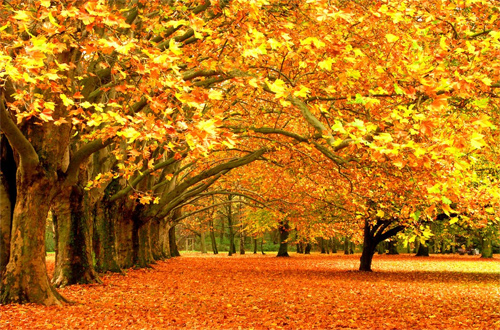 Real Nature Fall Photography Examples