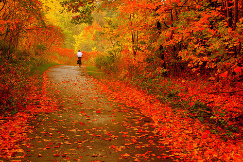autumn-fall-nature-photo-photography-red-Favim.com-52293