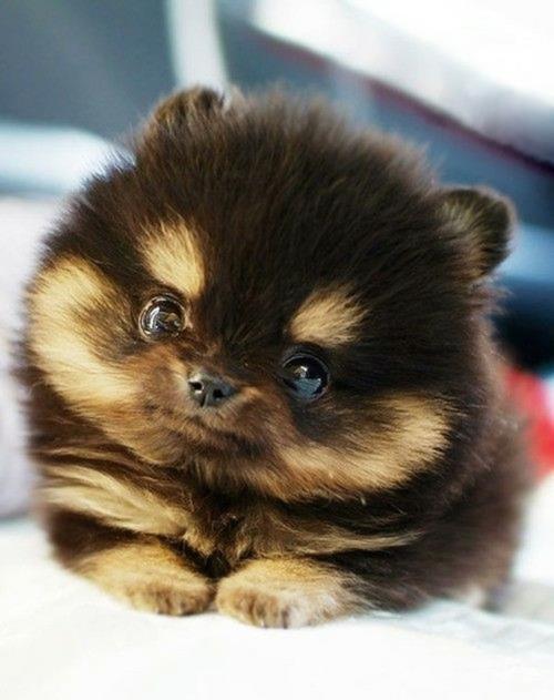 cute-nice-pet-sweet-Favim.com-653798