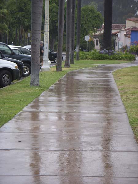 plant-sale-wet-pavement