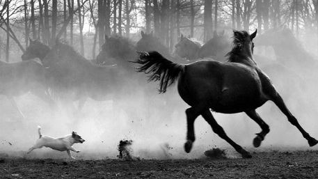 horses_dog_pursuit_photo_photography_digital_art
