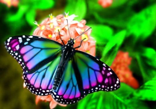 Butterfly Pictures01