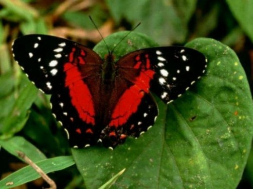 Butterfly Pictures3