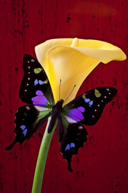 Butterfly picture1