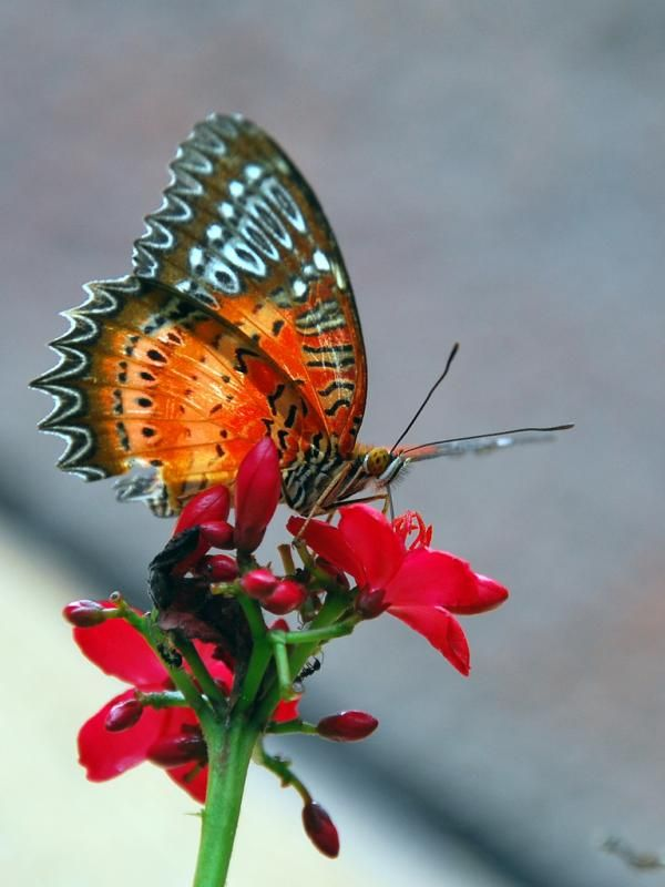 75 Beautiful Butterfly Pictures