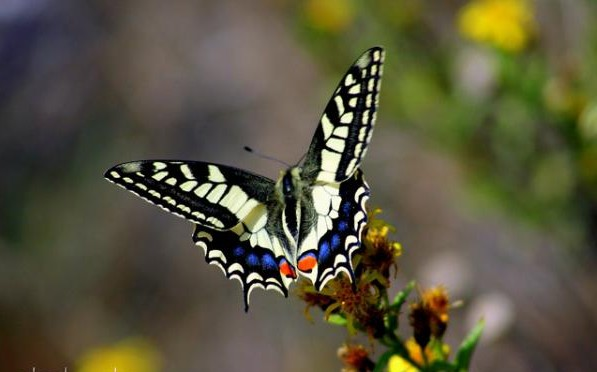 Butterfly tattoo13