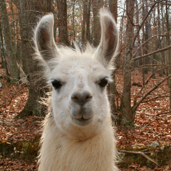 Companion-Llama 4