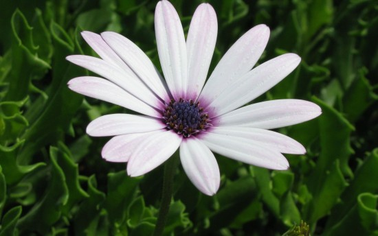Daisy Images 8