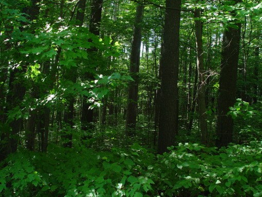 Forest Pictures 4
