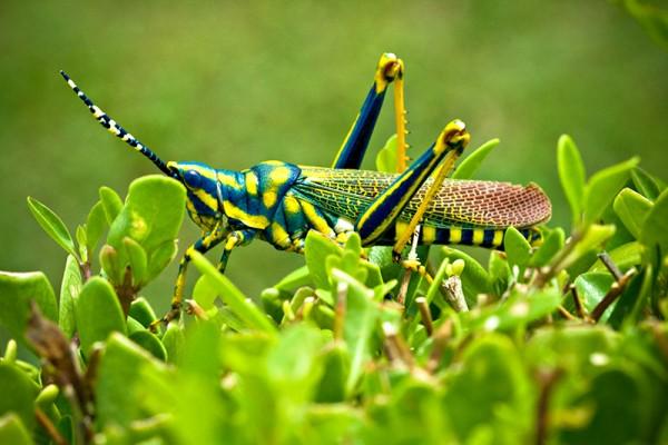 Grasshopper 10