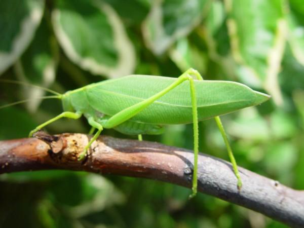 Grasshopper 9